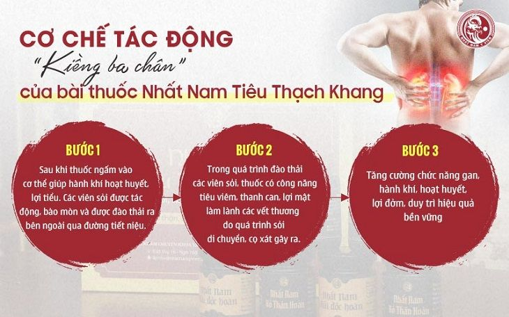 Cơ chế tác động kiềng ba chân chữa sỏi mật trong bài thuốc Nhất Nam Tiêu Thạch Khang
